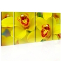 Obraz - Orchids - intensity of yellow color 1