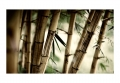 Fototapeta - Fog and bamboo forest 4